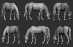 Animal: Horse №9