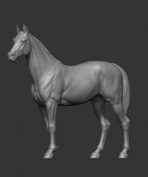 Animal: Horse №3 (75)