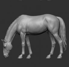 Животные: Лошадь №9