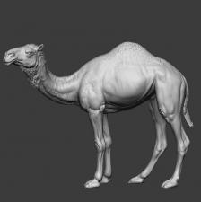 Животные: Верблюд №1