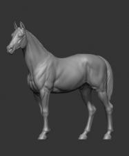 Животные: Лошадь №3