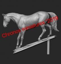 Animal: Horse №14